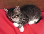 Sleeping kitten with white socks.