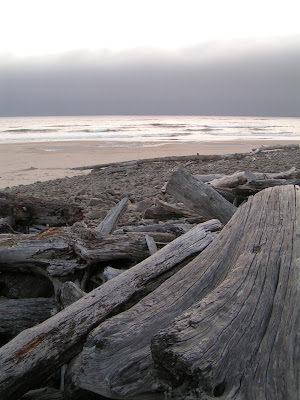 Driftwood on Manzanita Beach, Oregon.