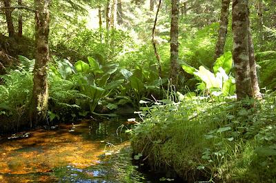 Creek near Ketchikan, Alaska.