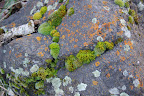 Moss and lichen on rock near Riggins, ID.