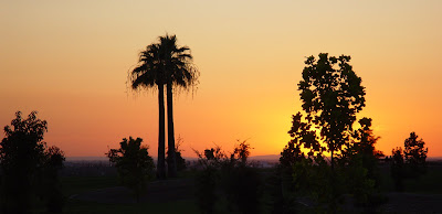 Hot sunset sky - palm silhouettes, Bakersfield, CA.