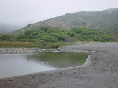 Misty hills reflecting in beach creek - Muir Beach, California.