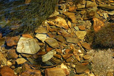 Creek stones underwater near Ketchikan Alaska.