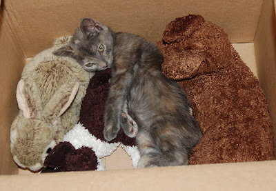 Kitten with her stuffed animals.