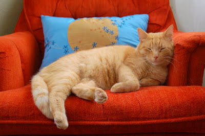 Trip the orange cat enjoys a snooze in the oranger chair.
