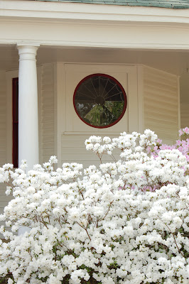 Jackson, MS - White house, covered porch, lovely round window, exploding white azalea bush