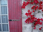 French window shutter and bougainvillea.