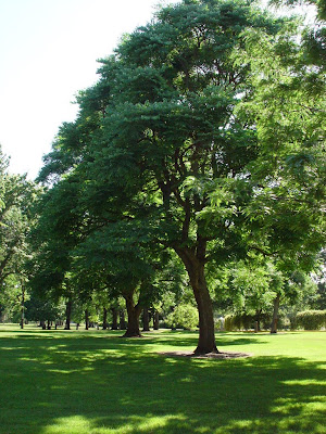 Tree shadows dapple green lawn in a Boise ID city park.