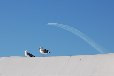 Blue Angels in San Francisco - arch over seagulls perched on Ferry building. Photo by Lisa Callagher Onizuka