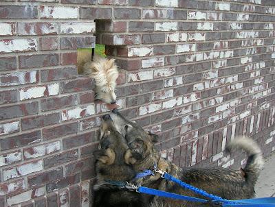 Dogs making friends. Photo by Lisa Callagher Onizuka