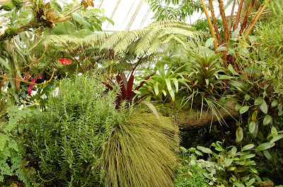 Greenscape. Conservatory of Flowers, San Francisco CA. Photo by Lisa Callagher Onizuka