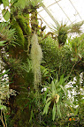 Hanging moss, orchids. Conservatory of Flowers, San Francisco CA. Photo by Lisa Callagher Onizuka