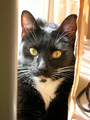 Black Cat with Yellow eyes finds a sunny window spot. Photo by Lisa Callagher Onizuka