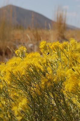 Sunny yellow. Photo by Lisa Callagher Onizuka