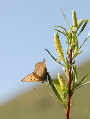 Upside down butterfly. Camping along South Fork Boise River. Photo by Lisa Callagher Onizuka