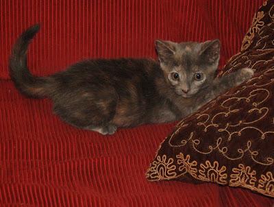 Frisky kitten.
