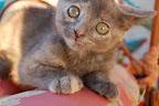 Funny face kitten.