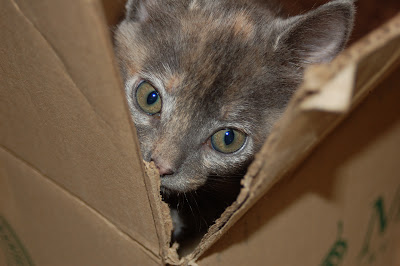 Kitten in a box.