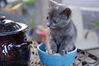 Cute kitten in a cup.