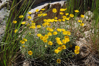 Yellow wildflowers.