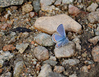 Soft blue butterfly.