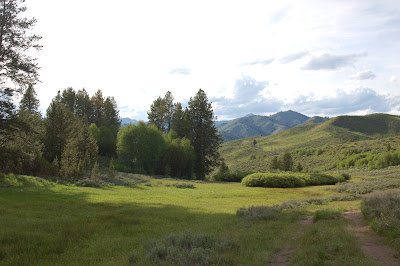 Lovely Idaho meadow.