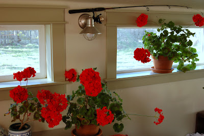 Ray's geraniums and fishing pole.