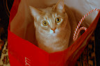 Phoebe the cat in red bag.