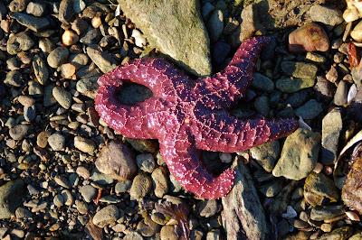 A-OK starfish.