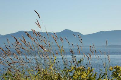 Grass, ocean, mountain islands near Ketchikan, AK.