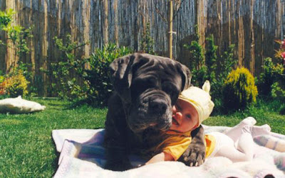 How to hug a baby...photographer unknown, but brilliant. http://www.dfordog.com/dog_funnies14.htm