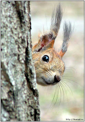 Funny squirrel face.