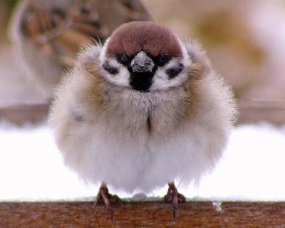 Fluffy birdy.