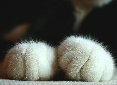 Paws. Very fluffy ones.