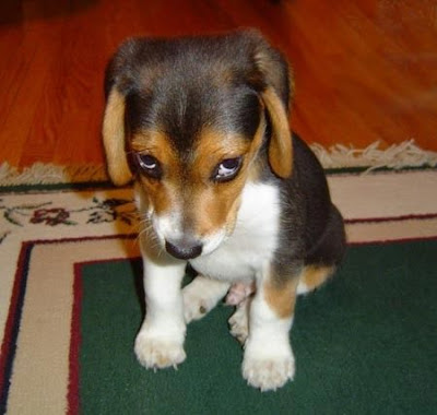 Puppy is very sorry.