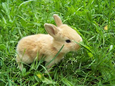 Darling baby bunny in spring grass. Photo by Joyce Allan.
