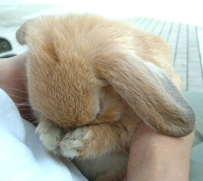 Sorry bunny...via cuteoverload.com