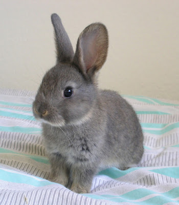 So cute it hurts...Darling gray bunny