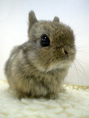 Another ridiculously cute bunny!