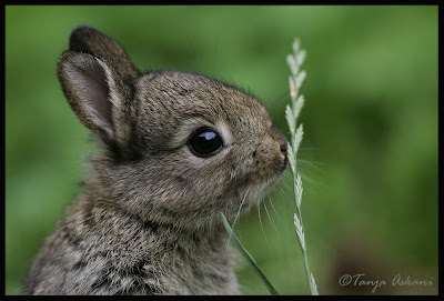 Sweet sweet bunny. Photo by Tanja Askani - http://www.fotocommunity.de/pc/account/myprofile/12278