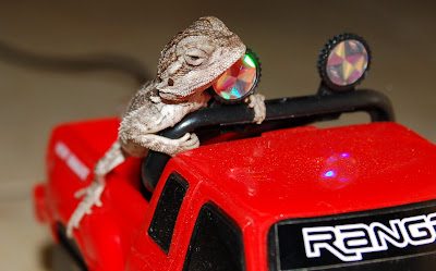 Bearded Dragon and his truck.