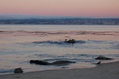 Monterrey Bay at dusk. Pink sky, mild surf, seagulls.