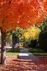 Fall sidewalk - Ellis Street, Boise ID.
