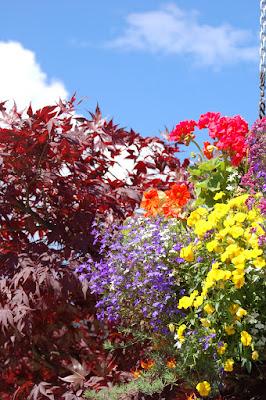Hanging flower basket and Japanese maple against blue sky.