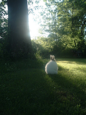 Bunny illuminated by photographer: flickr user just_duckie