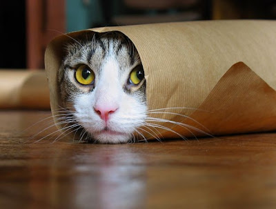 Purrito (cat burrito). - From CuteOverload.com