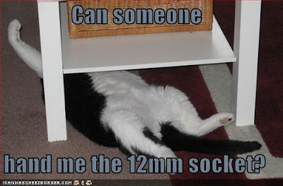 Can someone hand me the 12mm socket? - LOLcats from IcanHasCheezburger.com