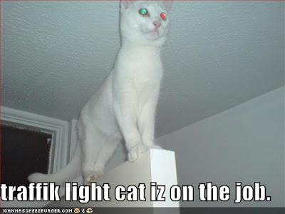 traffik light cat iz on the job - LOLcats from IcanHasCheezburger.com