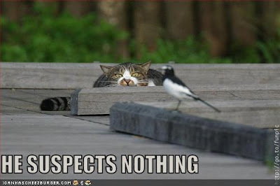 HE SUSPECTS NOTHING - LOLcats from IcanHasCheezburger.com