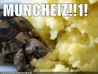 Muncheiz!!1! - from IcanHasCheezburger.com